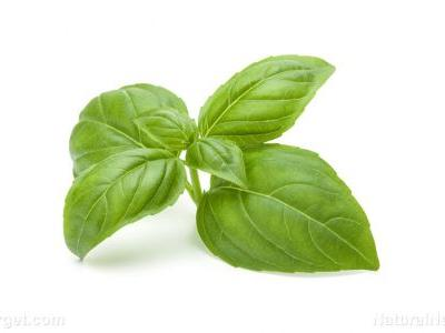 Basil extract restores lipid metabolism, prevents oxidation