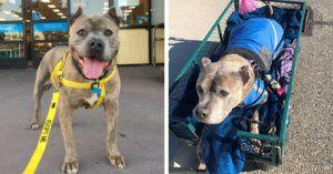 Rescue Says Goodbye, Remembers Shelter Dog Who Lived Happily Ever After