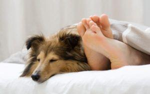 Research Shows Women Sleep Better With Dogs By Their Sides Instead Of Humans