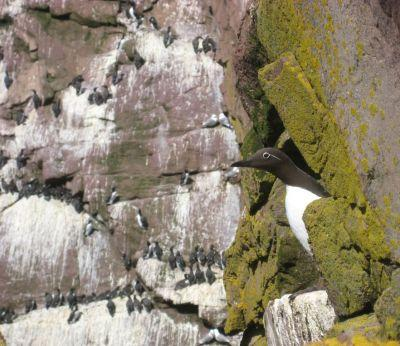 Seabirds Let Their Mates Know When They're Tired and Need a Break