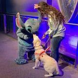 This Golden Retriever Meeting Her Favorite Disney Character Is Too Much Purity in One Video