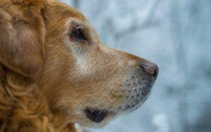 How To Help Senior Dogs Deal With Joint Pain