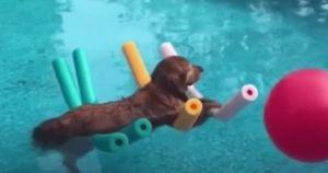 It Takes 4 Pool Noodles To Float This Chill Pup